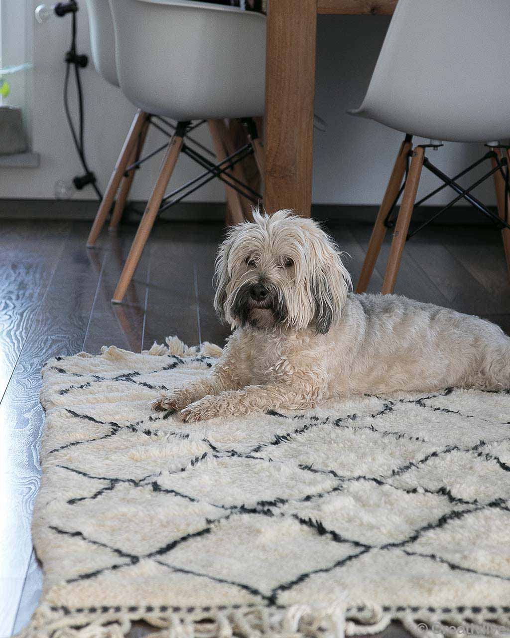 dog sitting on floor modern room rugs