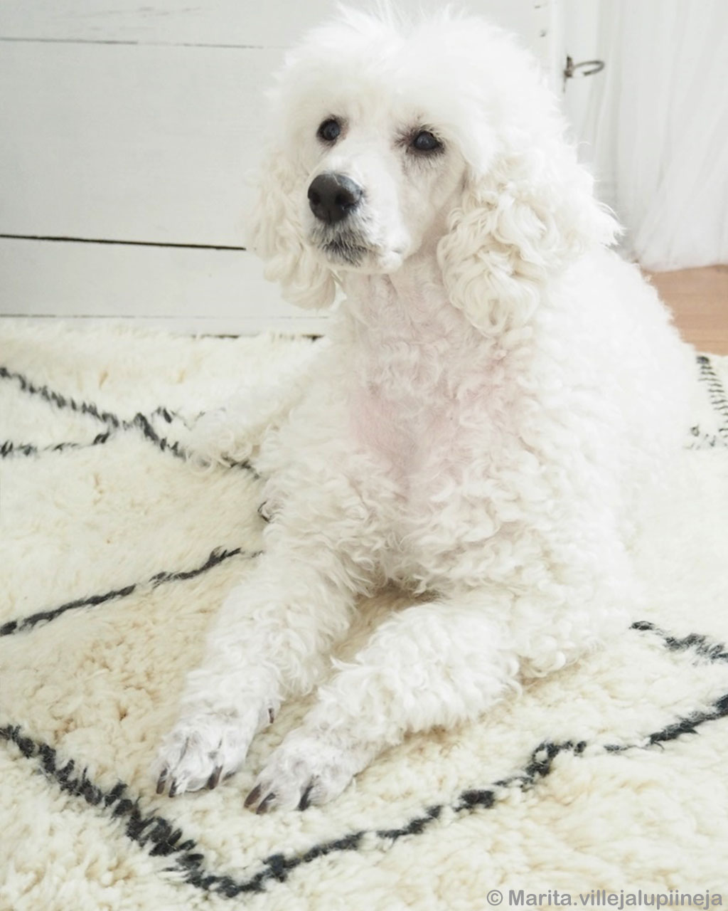 handmade beautiful fluffy white dog asian rugs