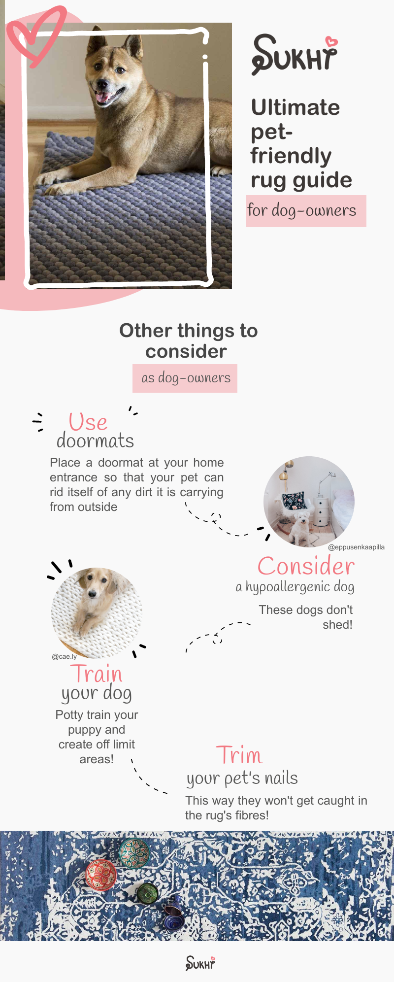 rug-tips-for-homes-with-dogs